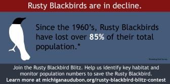 Rusty Blackbird Blitz Infographic-03