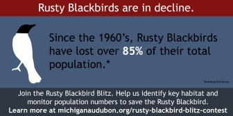 Rusty Blackbird Blitz Infographic-03