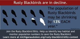 Rusty Blackbird Blitz Infographic-04